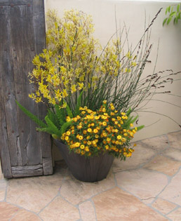 beautiful potted plant next to a rustic wooden gate on a flagstone patio in Rancho Santa Fe