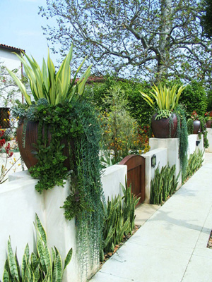 CA garden wall designed with succulents in pots sitting atop front yard wall in Los Angeles.